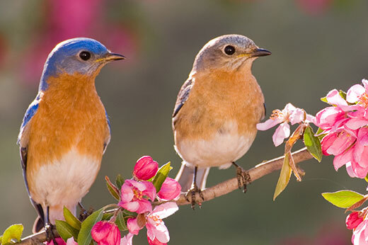 Two birds sitting on a tree branch