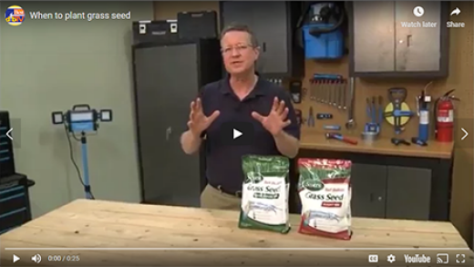 When to Plant Grass Seed?